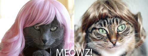 kitty-wigs-cats-thumb
