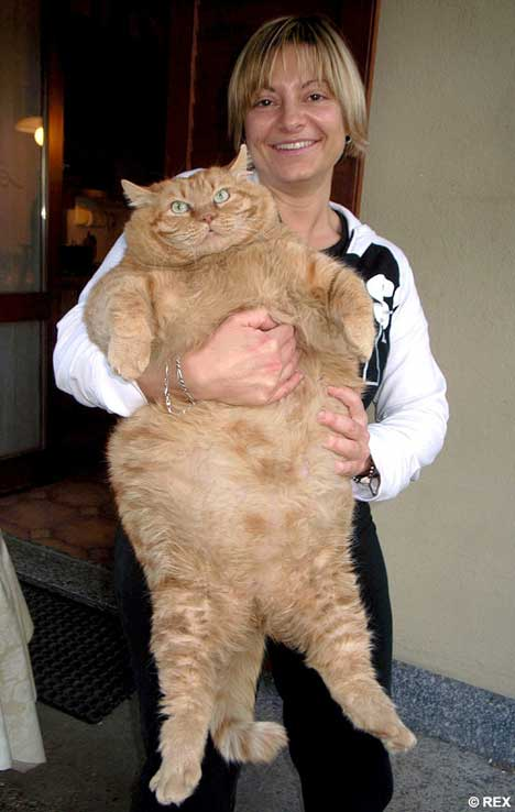 Orazio - Real Life Version of Garfield