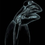 Kermit's X-ray T-Shirt
