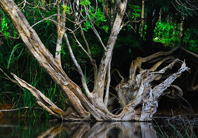 Agumbe_Swamp