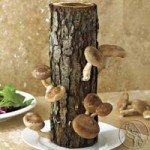 Exotic Food – Gourmet Mushrooms