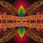 dagostino_03_butterfly