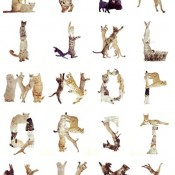 Cat Alphabets
