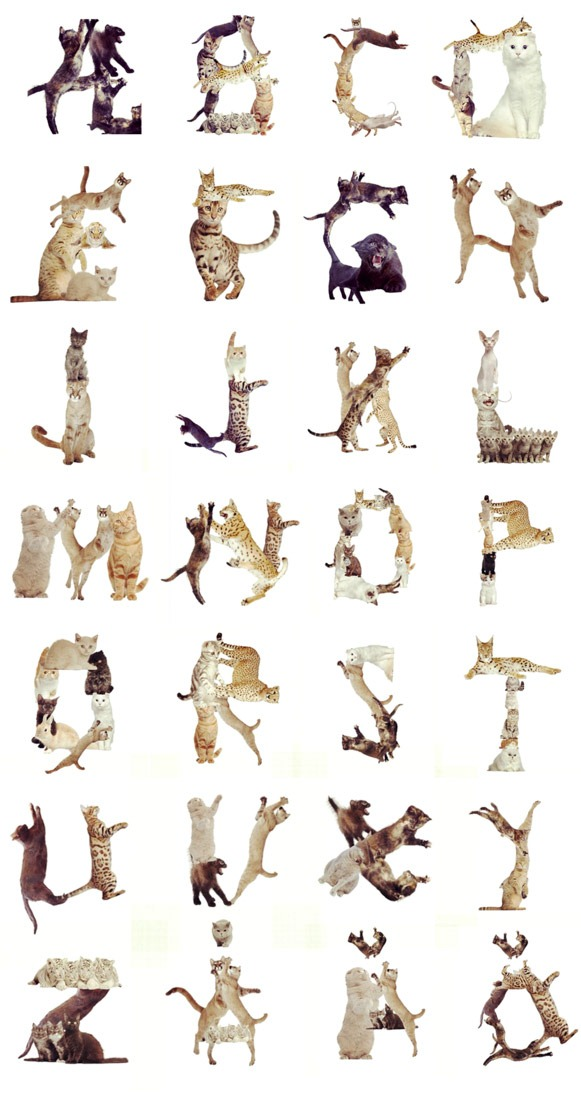 Cat-Alphabets-Typography
