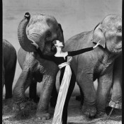 Dovima with Elephants - A Beautiful Vintage Photograph