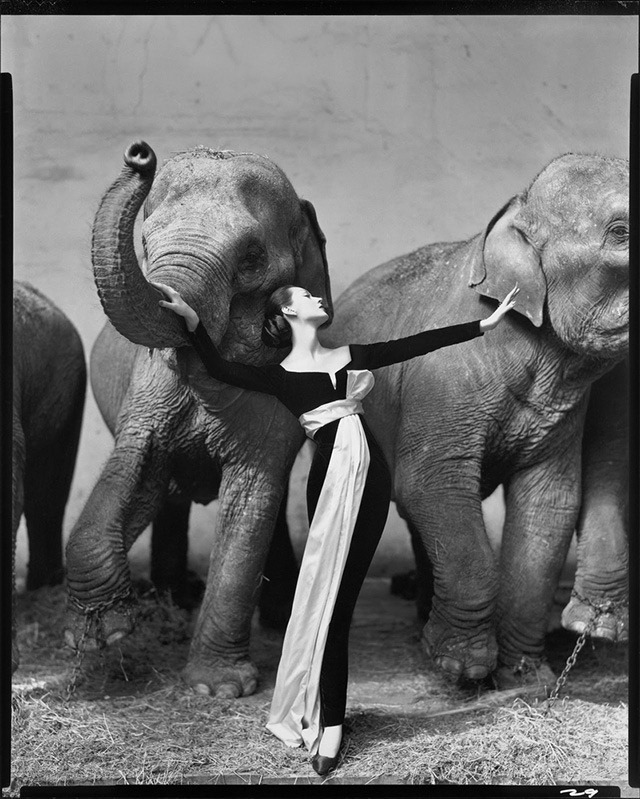 Dovima-with-elephants-by-Richard-Avedon
