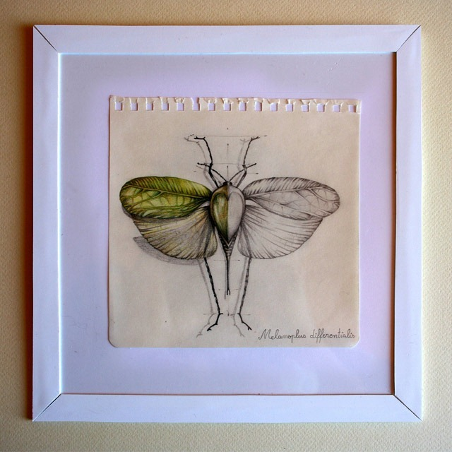 Insect-Entomology-Beautiful-small-things---Illustrations-by-Paula-Duta-05