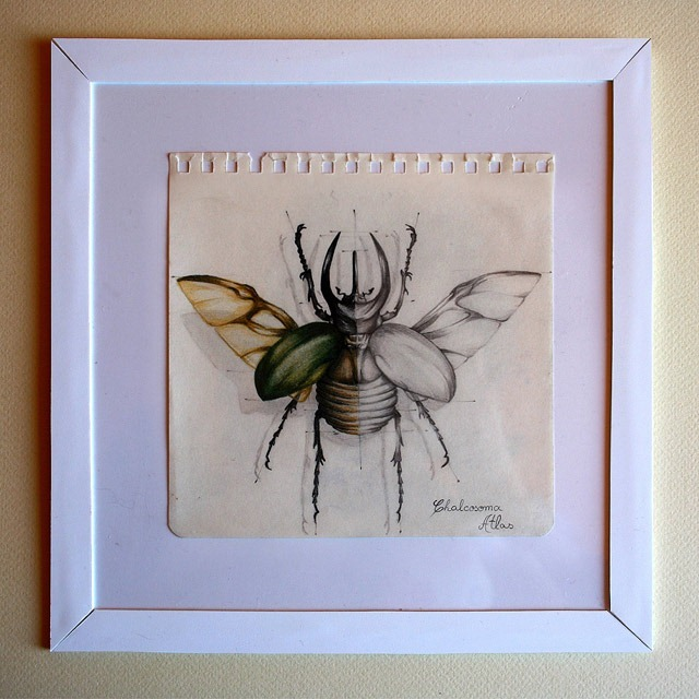 Insect-Entomology-Beautiful-small-things---Illustrations-by-Paula-Duta-06