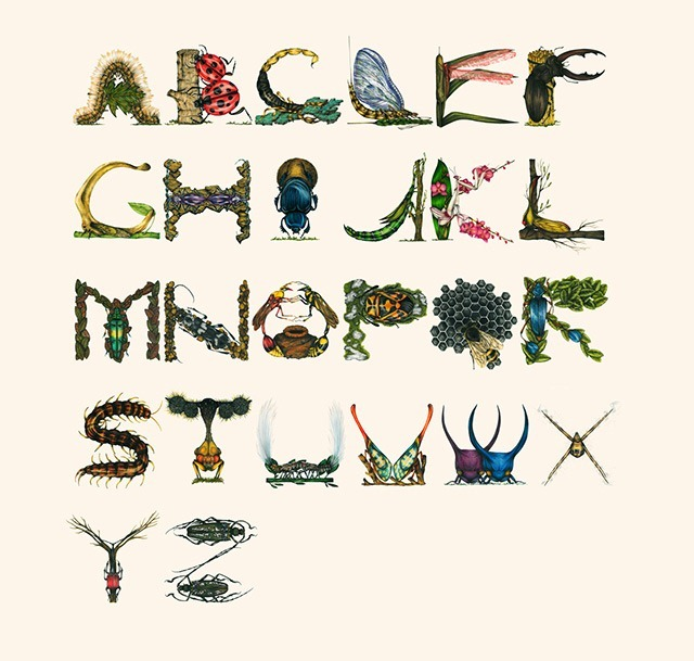 Insect-Alphabet-Illustration-by-Paula-Duta-01