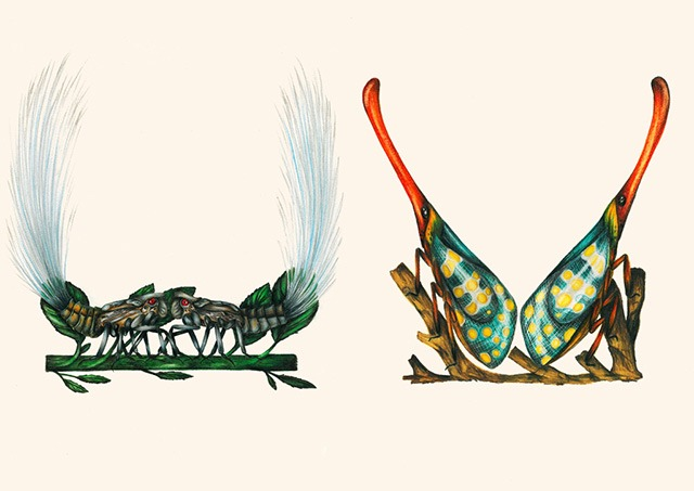 U-V-Insect-Alphabet-Illustrations-by-Paula-Duta