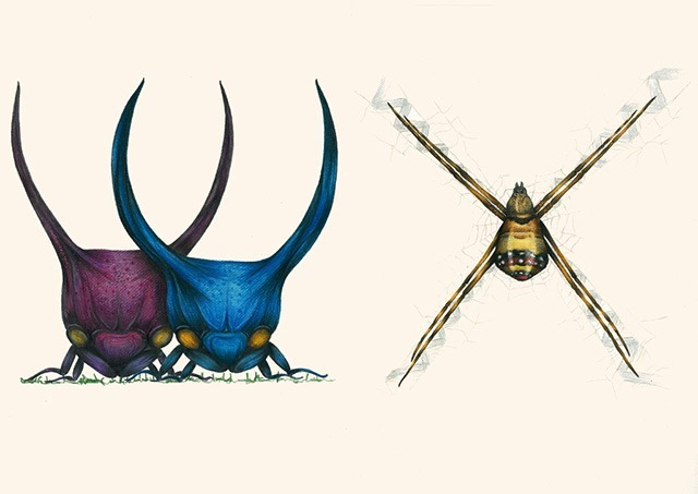 W-X-Insect-Alphabet-Illustration-by-Paula-Duta