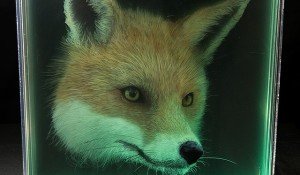 Fox-Holographic-Paintings-of-Animal-Heads-by-Yosman-Botero.jpg