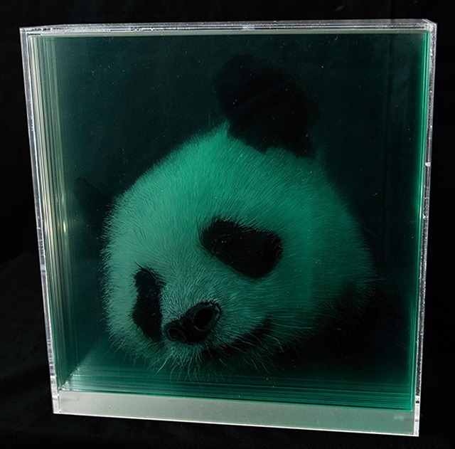Panda-Holographic-Paintings-of-Animal-Heads-by-Yosman-Botero