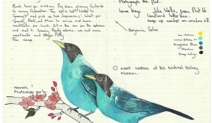 All-My-Beautiful-Boys-Ornithological-Drawings-by-Fran-Giffard-Green-Honeycreeper.jpg