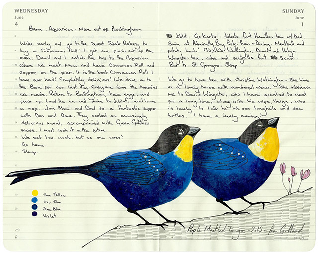 All-My-Beautiful-Boys-Ornithological-Drawings-by-Fran-Giffard-Purple-Mantled-Tanager