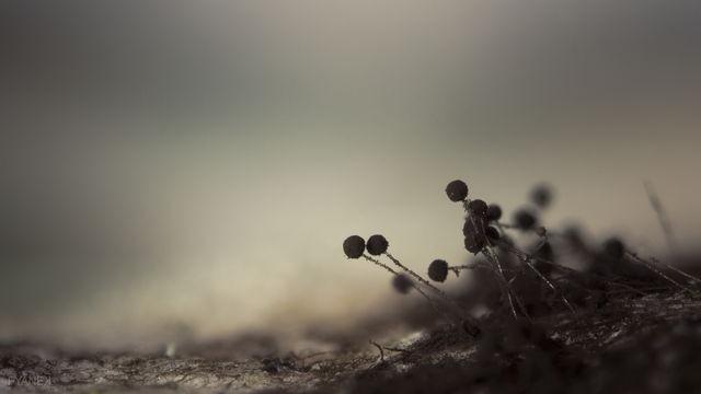 Black-bread-mold-by-pyanek-from-Amazing-Worlds-II