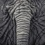 Beautiful Monochrome Photographs of Wild Animals by Antti Viitala
