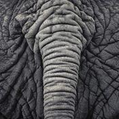 Beautiful Monochrome Photographs of Wild Animals by Antti Viitala
