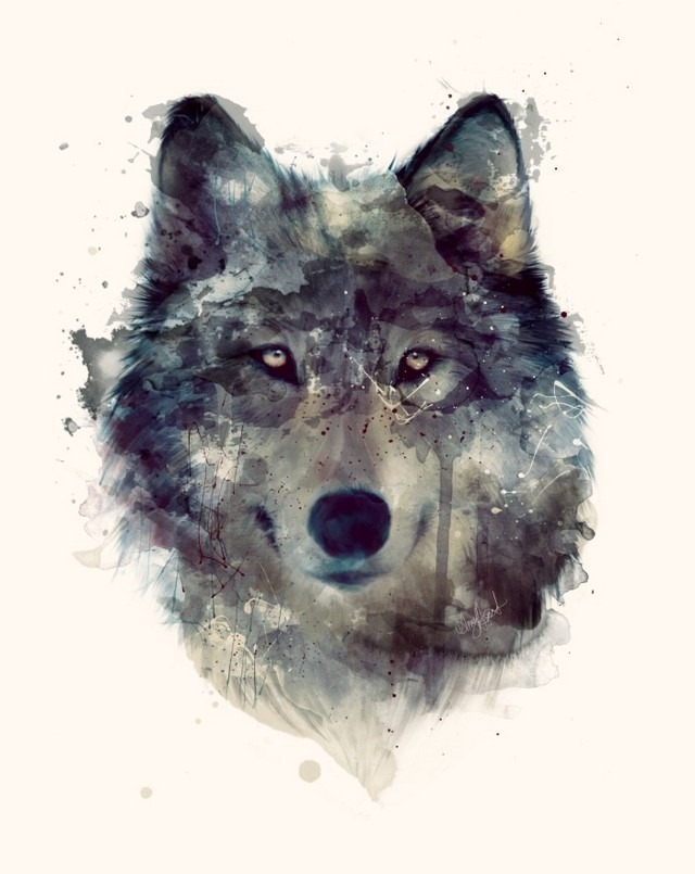 Wildlife_Watercolors_Wolf_Amy_Hamilton_1