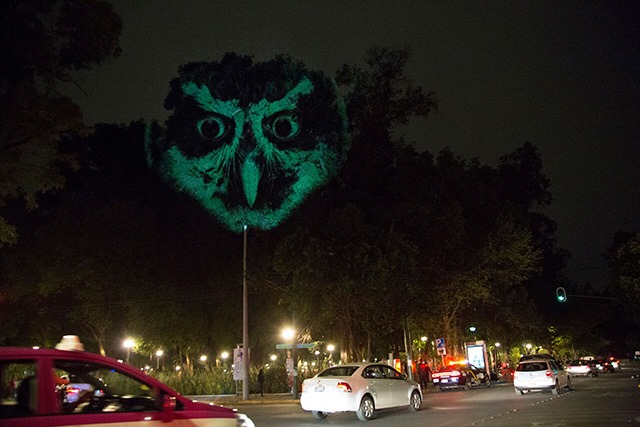 ANIMAL-WATCHING---Video-installation-on-trees-in-Mexico-Revista-Marvin-04