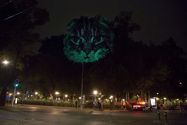 ANIMAL-WATCHING---Video-installation-on-trees-in-Mexico-Revista-Marvin-06