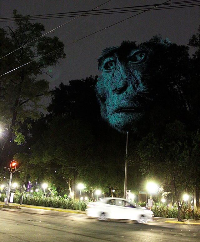 ANIMAL-WATCHING---Video-installation-on-trees-in-Mexico-Revista-Marvin