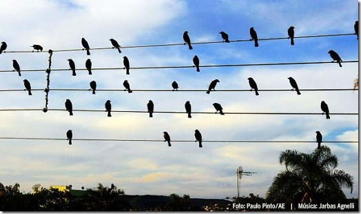 Read more about the article Song Created Using the Positions of Birds on Wires