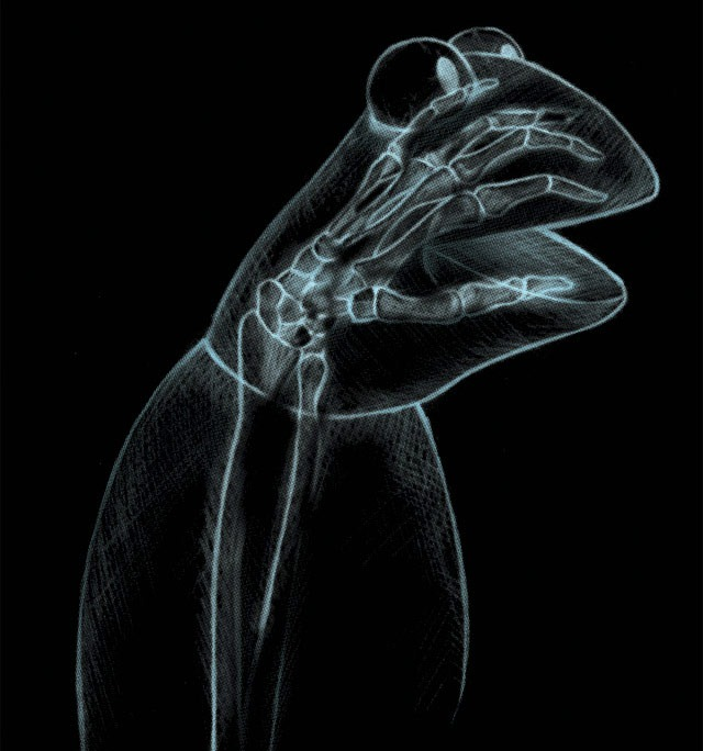 Read more about the article Kermit's X-ray T-Shirt