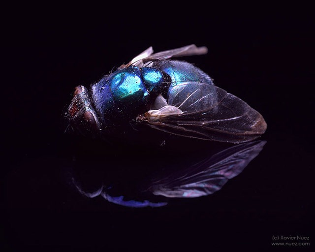 """Read more about the article Xavier Nuez's """"Glam Bugs"""" – A Series of Photographs"""