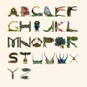Insect-Alphabet-Illustration-by-Paula-Duta-01
