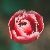fine-art-photography-ladiesandlord-2