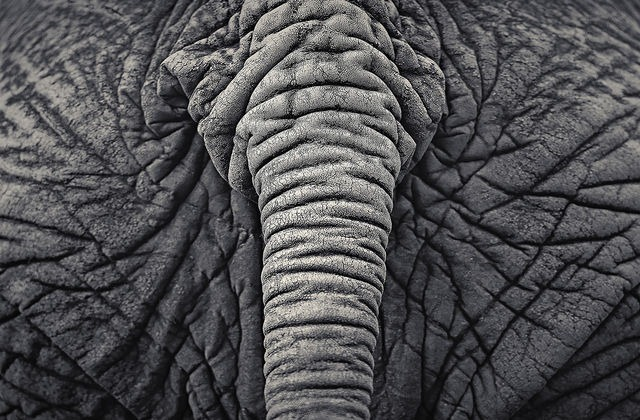 Read more about the article Beautiful Monochrome Photographs of Wild Animals by Antti Viitala