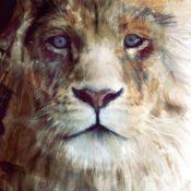 Wildlife_Watercolors_Lion_Amy_Hamilton_4