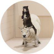 Frieke-Janssens-ANIMALCOHOLICS-Surreal-Photo-Series-7